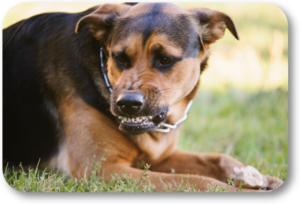 Help your dog when he feels scared and is becoming aggressive