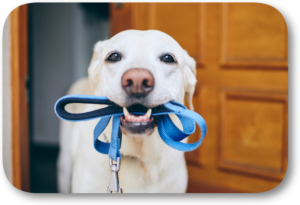 Only use standard leashes when training or walking your dog